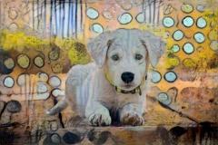 Dog_4646