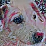 Dog_4660