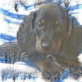 Dog_4672