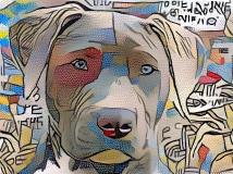 Dog_4676