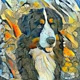 Dog_4678