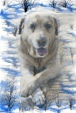 Dog_4681