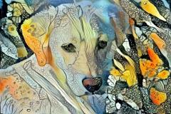 Dog_4690