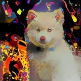 Dog_4691