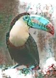 Parrot _5122
