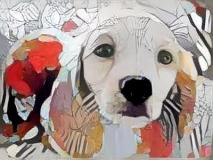Dog_5157