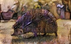 Hedgehog _5187