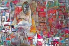 Coyote _5323