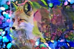 Coyote _5357