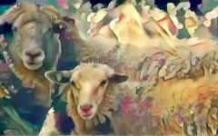 Sheep_5219