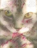 Cat_5232