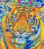 Tiger_0913