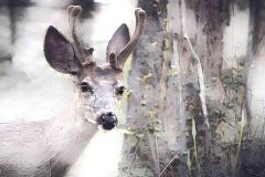 Deer_1213