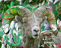 Sheep, Bighorn_3632