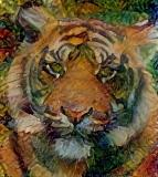 Tiger_3958
