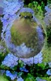 Bird_3961