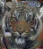 Tiger_4009