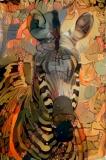 Zebra_4254