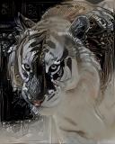 Tiger_4282