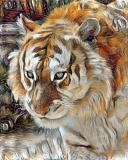 Tiger_4283