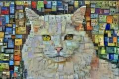 Cat_4296