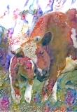 Cow_4376
