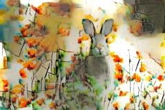 Rabbit_4423