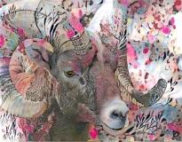 Big horn sheep_4440