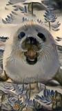 Seal_4449