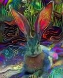 Rabbit _4514