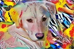 Dog_4816
