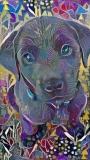 Dog_4820