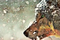 Wolf_0897