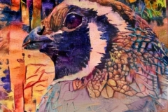 Bird_3682