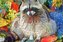Raccoon_3699