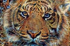 Tiger_3999