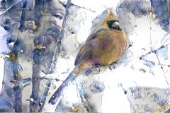 Bird, Cardinal_4013