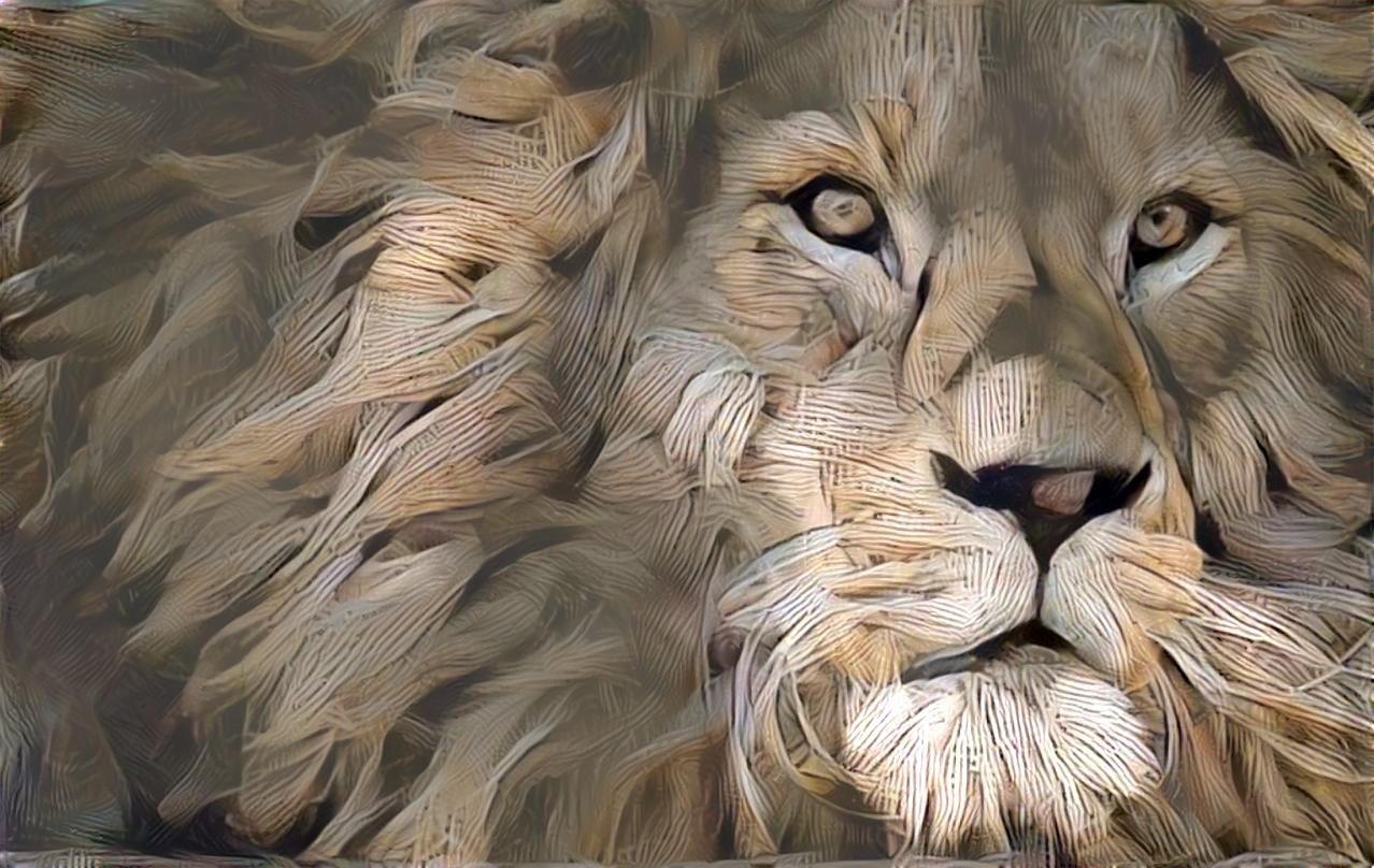Lion_5223