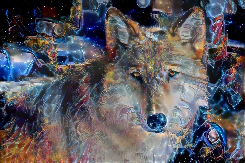 Wolf_5225