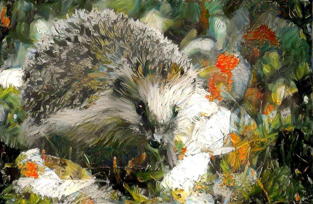 Hedgehog_5235